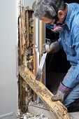 stock photo of termite  - Man prying sheetrock and wood damaged by termite infestation in house - JPG