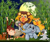 stock photo of rainforest animal  - Illustration of a rainforest with animals strolling in the middle of the night - JPG