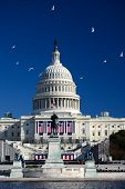 US Capitol Building with flying seagulls in a clear blue sky