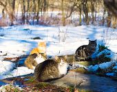 Cats Basking On The Sun In Winter