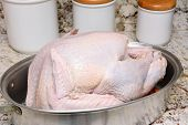 Closeup of an uncooked Thanksgiving Turkey in roasting pan on a kitchen counter top.