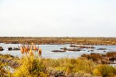 stock photo of marsh grass  - Marsh in natural park of rio Aveiro Portugal - JPG