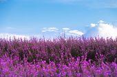 Beautiful Purple Flowers And Blue Sky