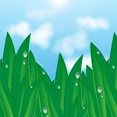 Green Grass With Dew Drops On A Background Of Blue Sky And Clouds.natural Background.summer And Spri