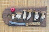 Fresh Cep Mushrooms On Wooden Cutting Chopping Board