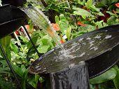 Plant Nature 2