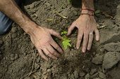 growth concept: close-up of male hands planting a small sprout