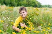 image of tansy  - Boy on meadow with tansy in summer - JPG