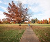 a woman walking with her pit bull in a park on an autumn day