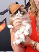 LOS ANGELES - APR 13:  Grumpy Cat arrives to the 2014 MTV Movie Awards  on April 13, 2014 in Los Angeles, CA.