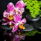 Beautiful Spa Concept Of Beautiful Lace Lilac Orchid (phalaenopsis), Green Branch Of Maidenhair, Zen