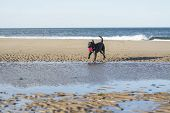 Black Labrador Playing With Ball On Beach