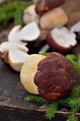 Mushroom Boletus over Wooden Background