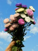 bouquet of asters against blue sky background