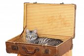 Travelling With Pet - Tomcat In A Suitcase