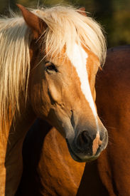 picture of cade  - Horses in a field - JPG