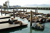 pier39 sea lions on break