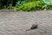 Little Pigeon Landed On The Garden Terrace