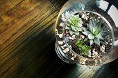 Succulent plants in Glass Vase