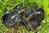 Newborn Baby Rabbits In The Grass