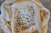 stock photo of cocoon  - Bag full of cocoons used for silk production in Uzbekistan - JPG
