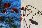 lights and shadow grape vine