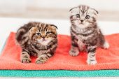 Cute And Curious kittens
