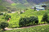 View To Tea Plantation With Few Houses Among Hills