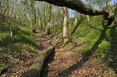 stock photo of hollow  - Steep track in Cotswold ancient woodland Hollow Combe Dursley - JPG