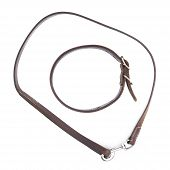 Old leather dog collar and leash isolated
