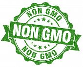 Non Gmo Green Grunge Seal Isolated On White