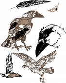 foto of raven  - graphic illustration ravens tattoo on white background - JPG