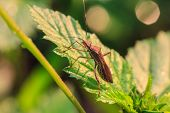 stock photo of insect  - insect on plant - JPG