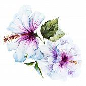 foto of hibiscus  - Beautiful vector image with nice watercolor hibiscus flower - JPG
