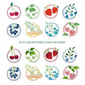 stock photo of rowan berry  - Set of logos - JPG