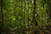 stock photo of rainforest  - Beautiful landscape of dense rainforest nature - JPG