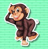 picture of monkeys  - Closeup happy monkey on green background - JPG