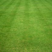 image of lawn grass  - lawn of grass cut with parallel stripes - JPG