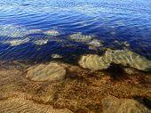 Algae, deep blue water