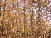 Georgia Fall Trees
