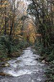 Great Smokey Mountain River