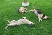 Dogs on the grass