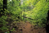 Proxy Falls Trail