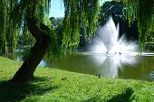 A fountain with a gentle spray with pond and park background