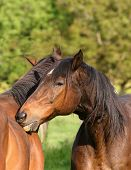 Photograph Of Two Horses Having A Tender Moment