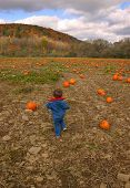 Choosing A Pumpkin