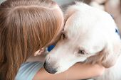 Girl hugging golden retriever, closeup. Service dog poster
