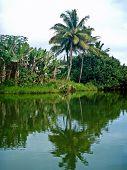 Hanalei River, Kauai