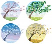 image of seasonal tree  - Cartoon illustration of a tree during the four seasons.