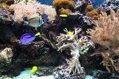 Aquarium In Zoo